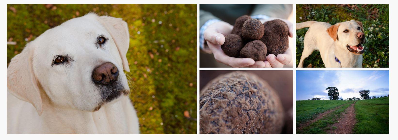 New Member – Australian Truffle Traders