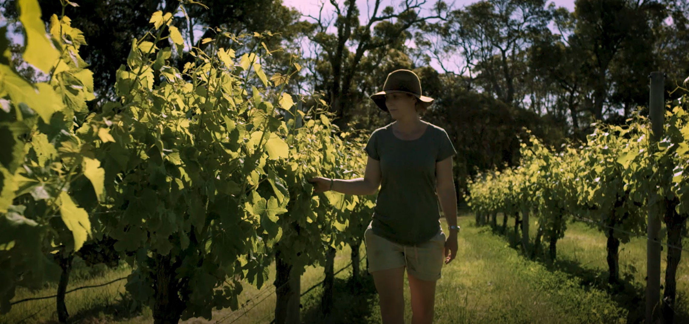 Pursuit of perfection at heart of new 'The Winemaker' trilogy