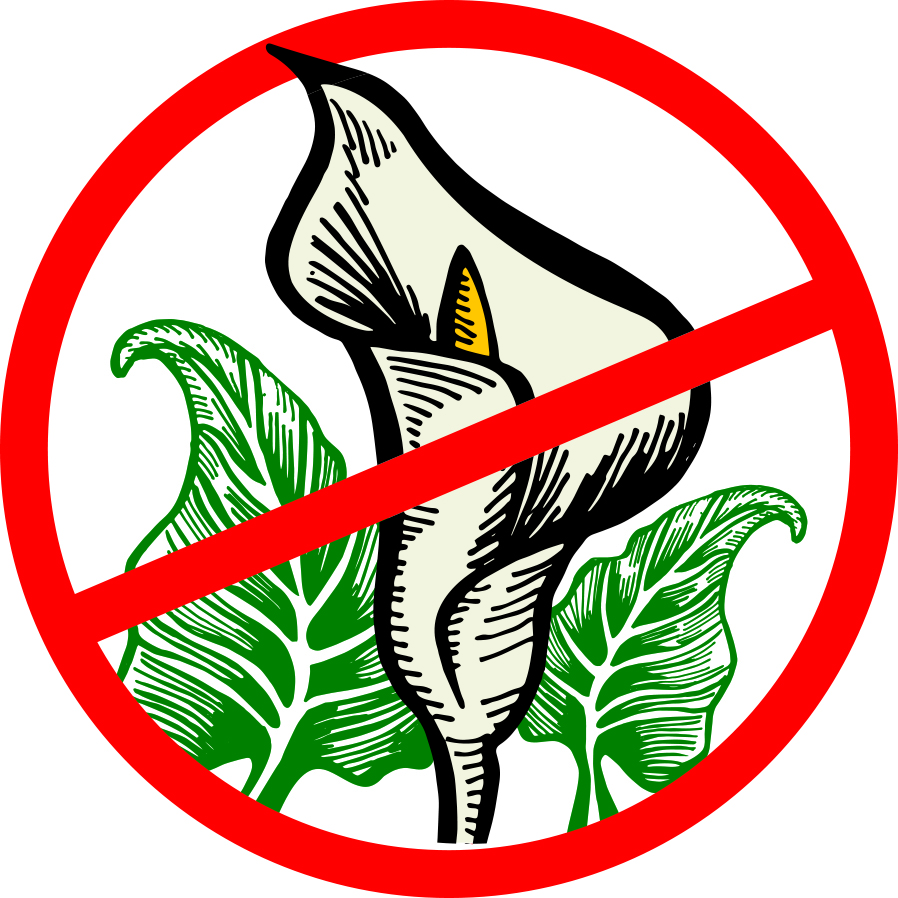 Join the Arum Lily Blitz to Protect Tourism Values